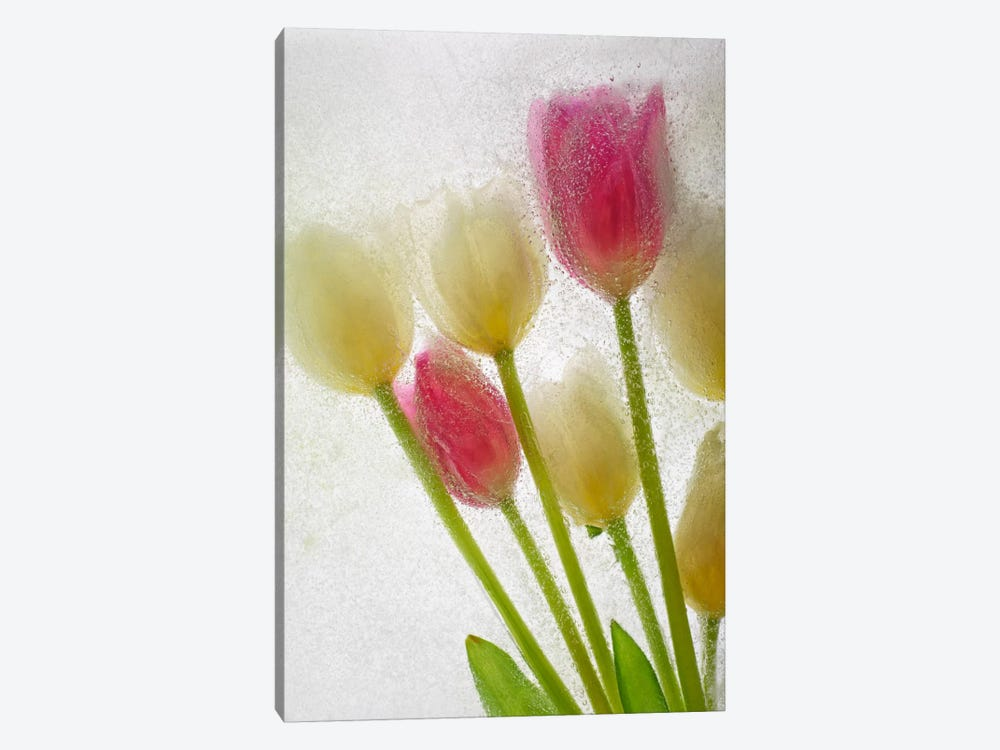 Flores Congeladas #605 by Moises Levy 1-piece Canvas Print