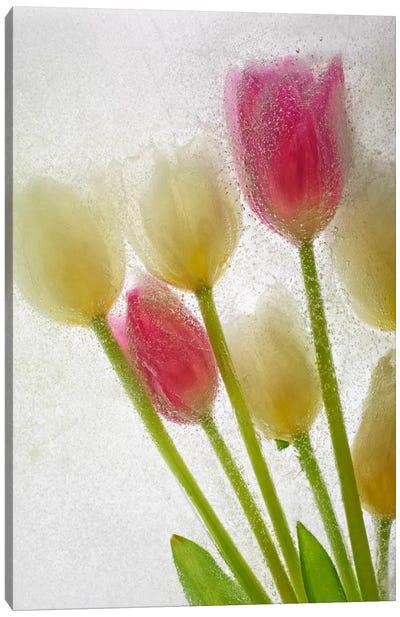 Flores Congeladas #605 Canvas Art Print