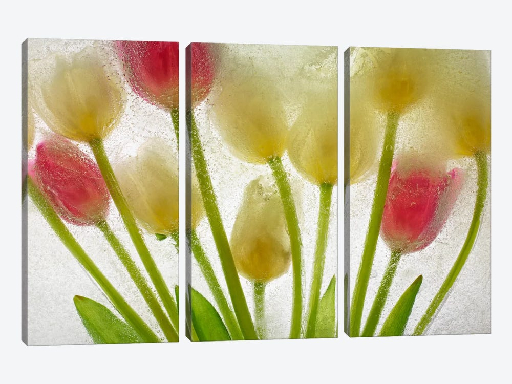 Flores Congeladas #610 by Moises Levy 3-piece Canvas Wall Art