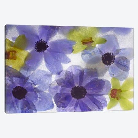 Flores Congeladas #631 Canvas Print #MOL144} by Moises Levy Canvas Art