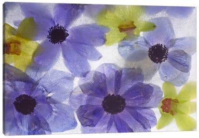 Flores Congeladas #631 Canvas Art Print