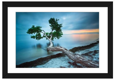 Water Tree 10 Color Framed Art Print