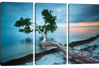 Water Tree 10 Color Canvas Art Print