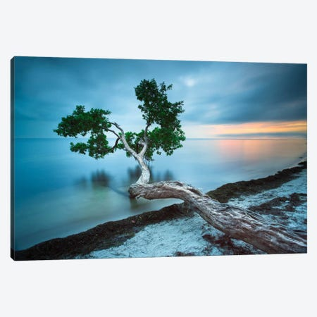 Water Tree 10 Color Canvas Print #MOL147} by Moises Levy Canvas Wall Art