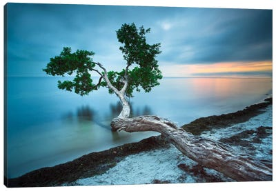 Water Tree 10 Color by Moises Levy Canvas Wall Art