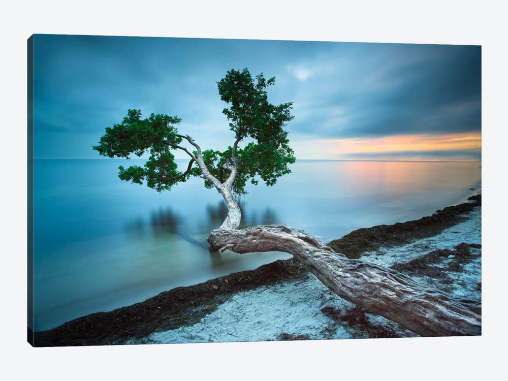 Water Tree 10 Color by Moises Levy 1-piece Canvas Art Print