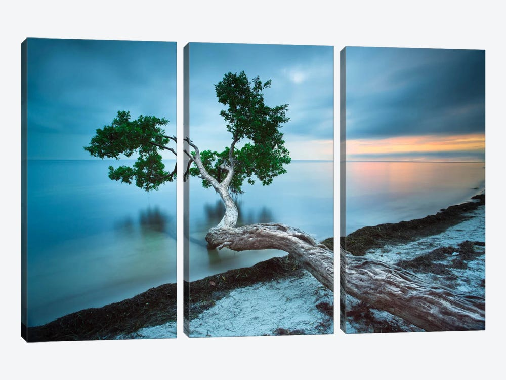 Water Tree 10 Color by Moises Levy 3-piece Canvas Print