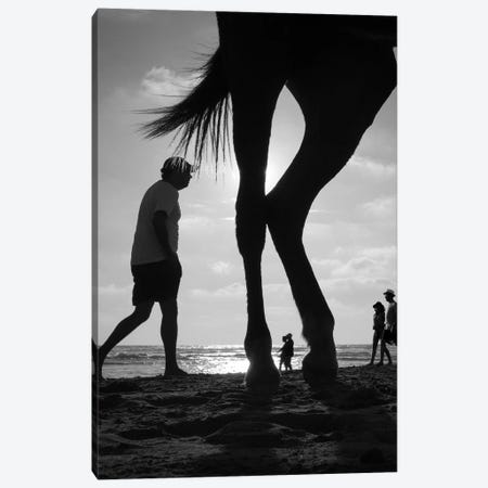 Tropical Shadows XX Canvas Print #MOL213} by Moises Levy Art Print