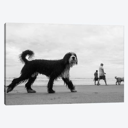 Dog II Canvas Print #MOL292} by Moises Levy Canvas Print