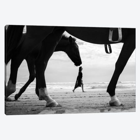 Horses IV Canvas Print #MOL297} by Moises Levy Canvas Art