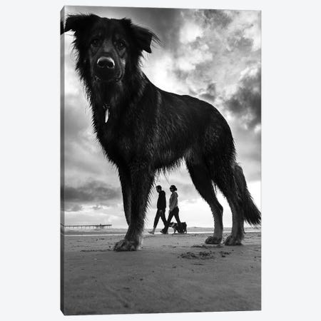 Dogs II Canvas Print #MOL414} by Moises Levy Canvas Art