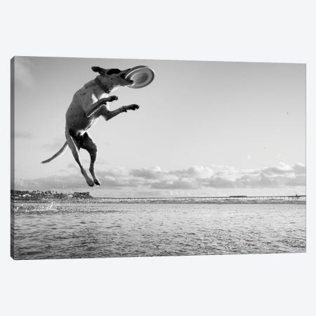 Flying Dog III Canvas Print #MOL457} by Moises Levy Canvas Artwork