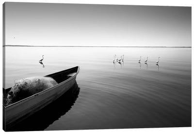 Boat And Herons Canvas Print #MOL51