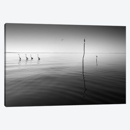 4 Herons Canvas Print #MOL53} by Moises Levy Canvas Art Print