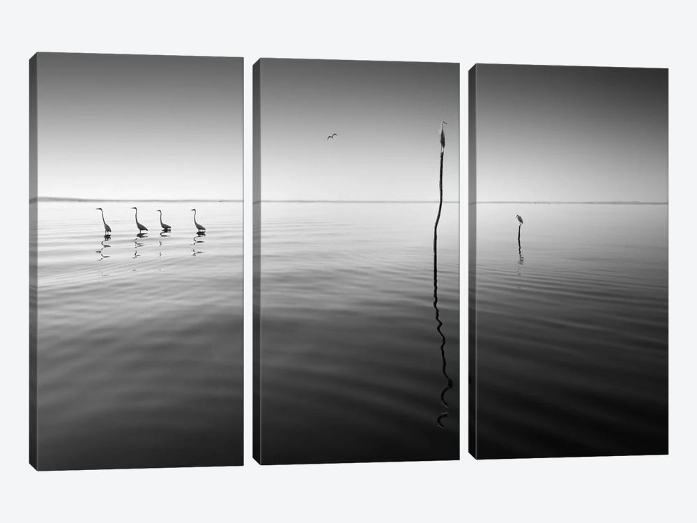 4 Herons by Moises Levy 3-piece Canvas Art