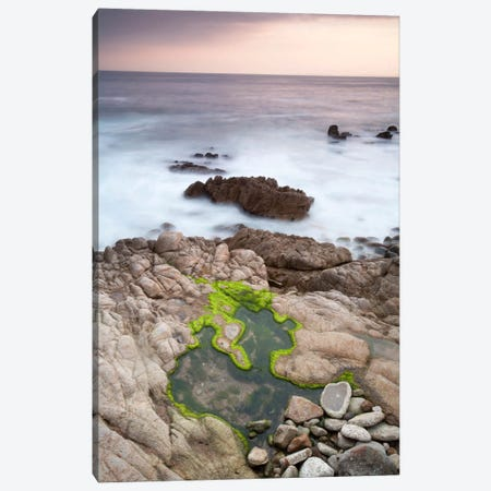 Monterey #122 Canvas Print #MOL68} by Moises Levy Canvas Wall Art