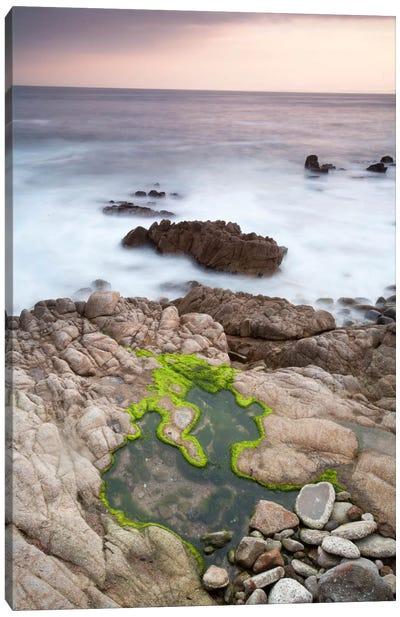 Monterey #122 Canvas Art Print