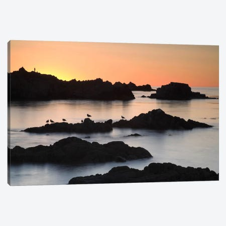 Monterey #67 Canvas Print #MOL69} by Moises Levy Canvas Art