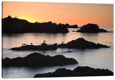 Monterey #67 Canvas Print #MOL69