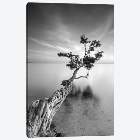 Water Tree V Canvas Print #MOL6} by Moises Levy Canvas Art