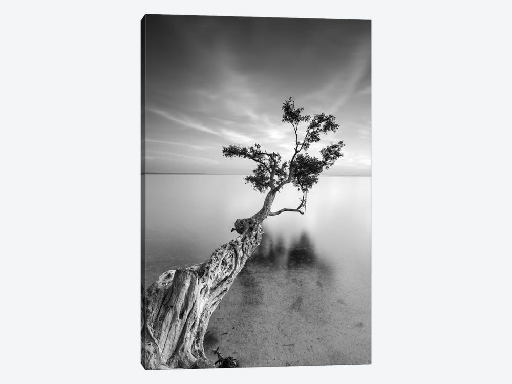 Water Tree V by Moises Levy 1-piece Canvas Art