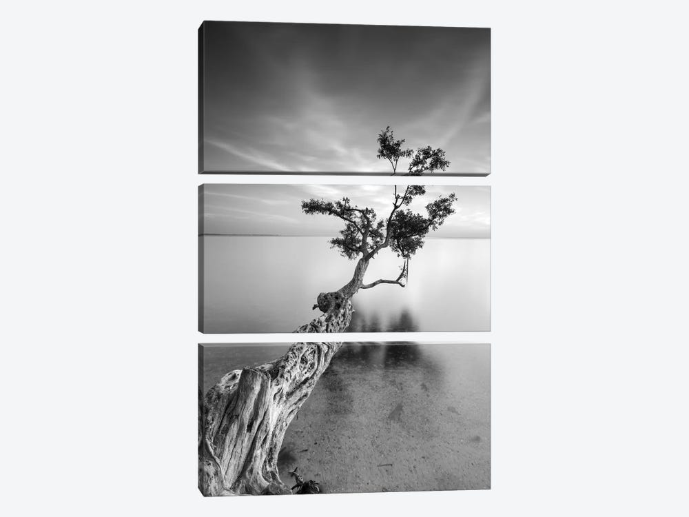 Water Tree V by Moises Levy 3-piece Canvas Art