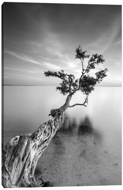 Water Tree V Canvas Art Print