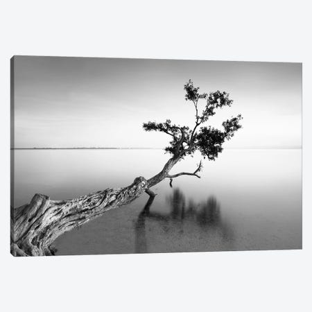 Water Tree IX Canvas Print #MOL7} by Moises Levy Canvas Wall Art