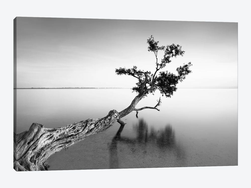 Water Tree IX by Moises Levy 1-piece Canvas Print