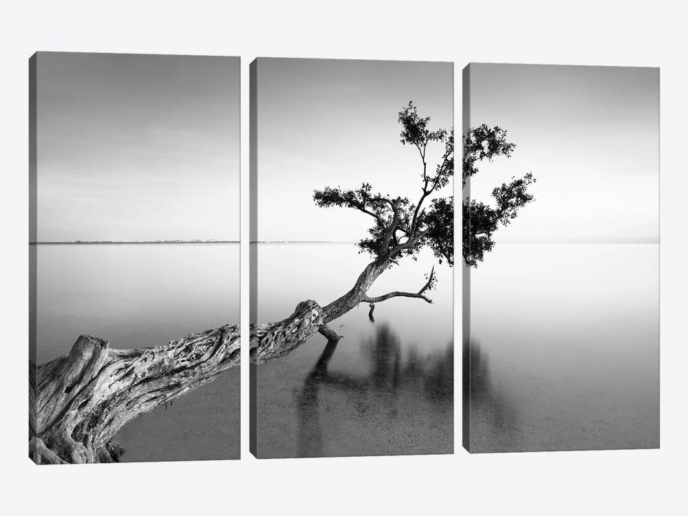 Water Tree IX by Moises Levy 3-piece Canvas Print