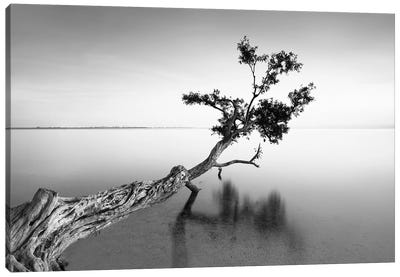 Water Tree IX Canvas Art Print