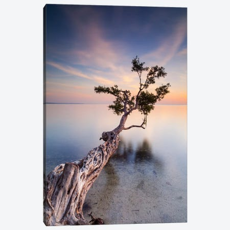 Water Tree X Canvas Print #MOL8} by Moises Levy Art Print