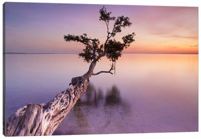 Water Tree XI Canvas Art Print