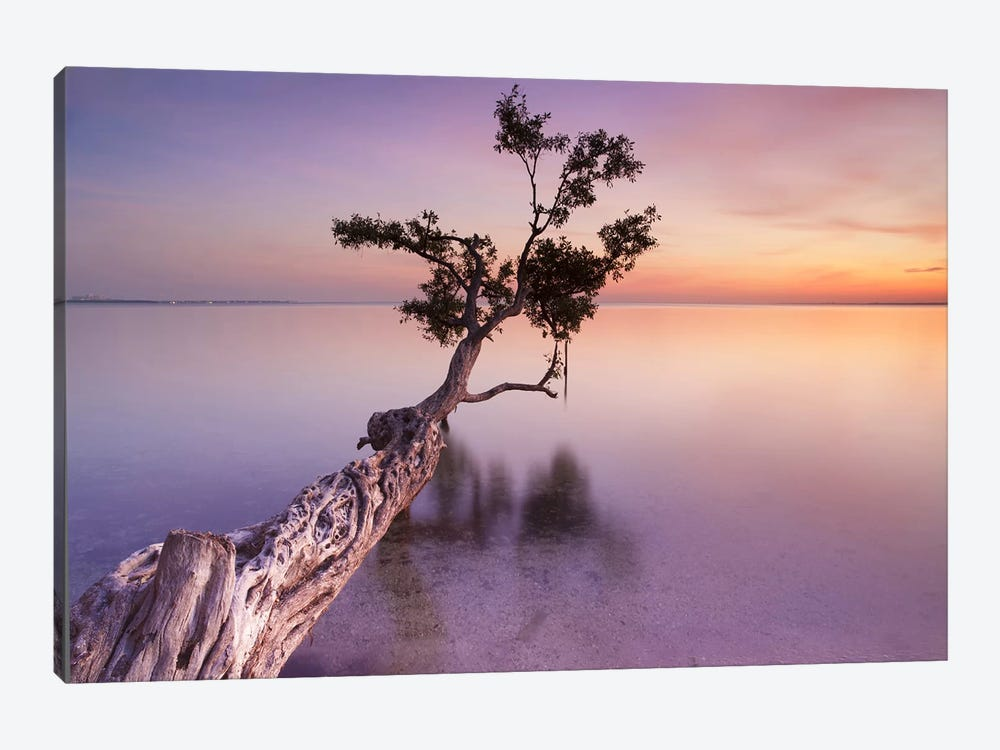 Water Tree XI 1-piece Canvas Art Print