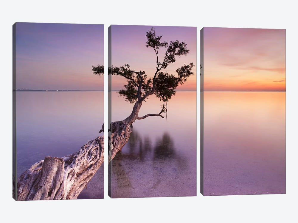 Water Tree XI by Moises Levy 3-piece Canvas Art Print