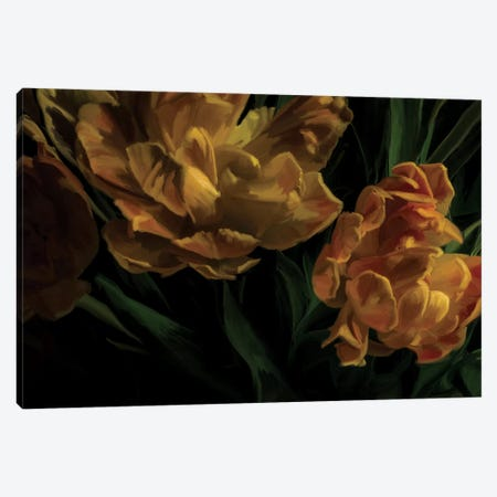 Tulips Citrine Canvas Print #MOO10} by 5by5collective Canvas Art