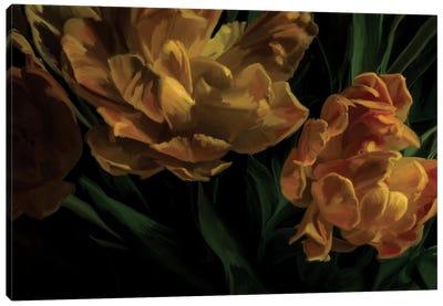 Tulips Citrine Canvas Print #MOO10