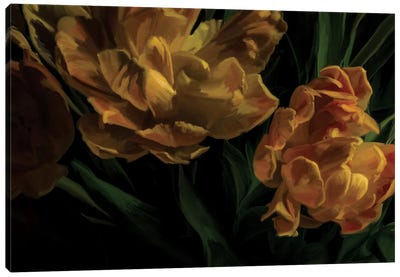 Tulips Citrine Canvas Art Print