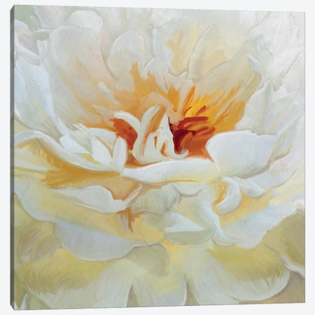 Alabaster Petals Canvas Print #MOO1} by 5by5collective Canvas Artwork