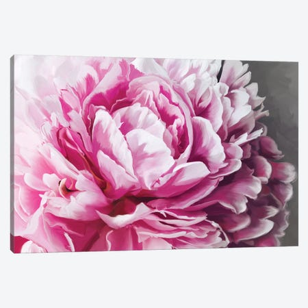 Peony Blush Canvas Print #MOO8} by 5by5collective Canvas Art