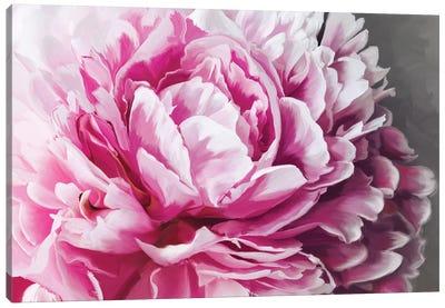 Peony Blush Canvas Art Print