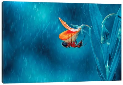 Rain Canvas Art Print