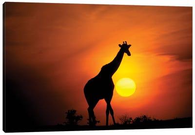 Giraffe, Africa, Kenya, Masai Mara. Canvas Art Print