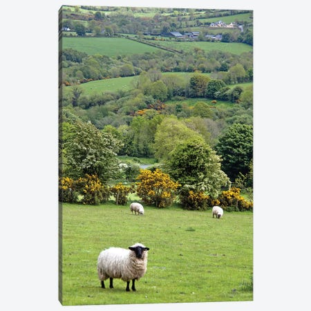 Countryside Landscape, Dingle Peninsula, County Kerry, Munster Province, Republic Of Ireland Canvas Print #MPA1} by Marilyn Parver Canvas Print