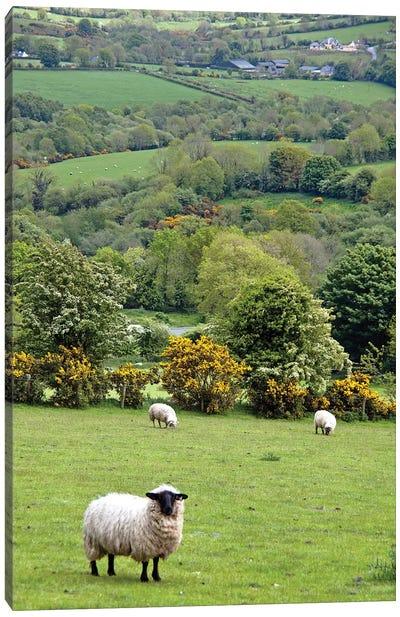 Countryside Landscape, Dingle Peninsula, County Kerry, Munster Province, Republic Of Ireland Canvas Art Print