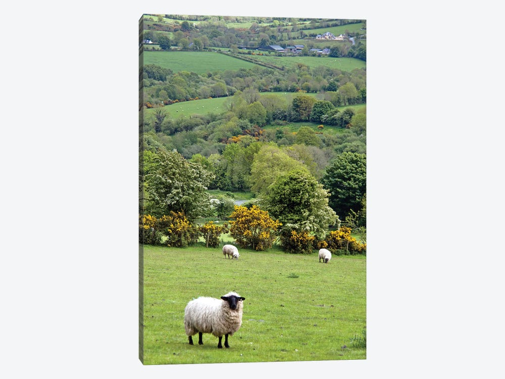 Countryside Landscape, Dingle Peninsula, County Kerry, Munster Province, Republic Of Ireland by Marilyn Parver 1-piece Canvas Print