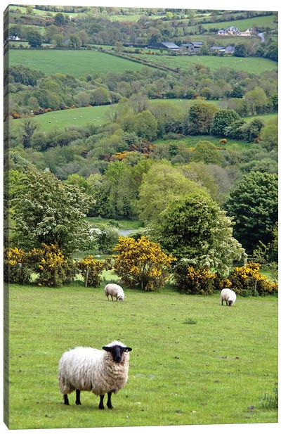 Countryside Landscape, Dingle Peninsula, County Kerry, Munster Province, Republic Of Ireland Canvas Art Print