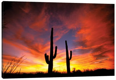 A Pair Of Saguaro Cacti At Sunset, Sonoran Desert, Arizona, USA Canvas Art Print