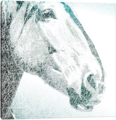 Equus Canvas Art Print