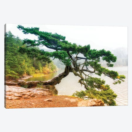 Orcas Pine B Canvas Print #MPH104} by MScottPhotography Canvas Art